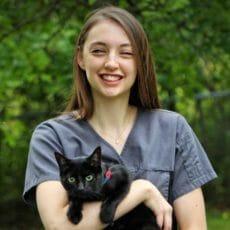 Technicien en santé animale tenant un chat